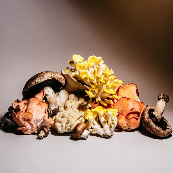 mushrooms man repeller house plant